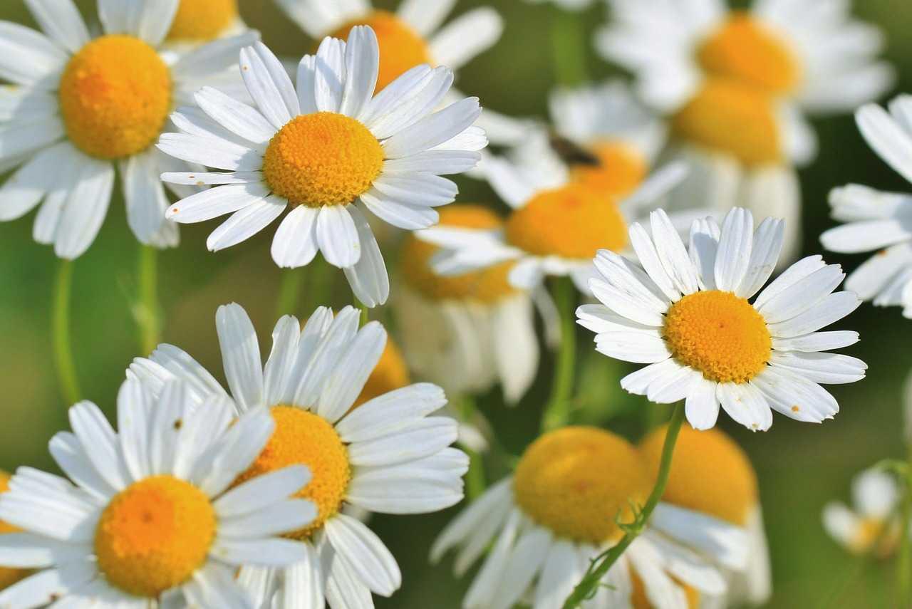 çiçek tokası
